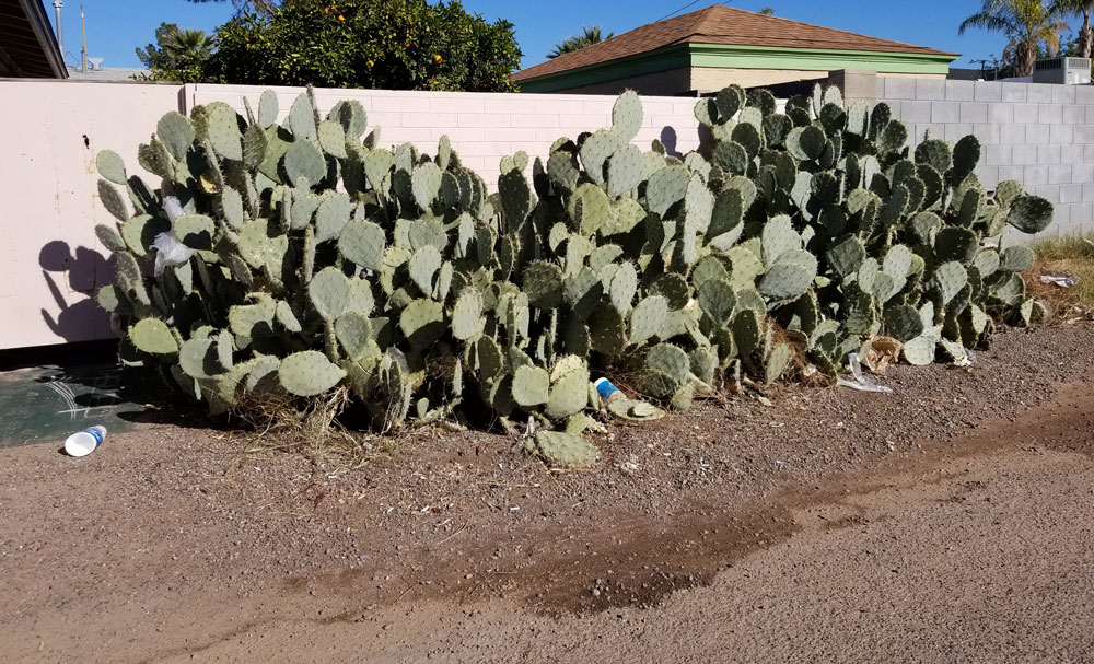 Cyanobacteria and cactus similarities